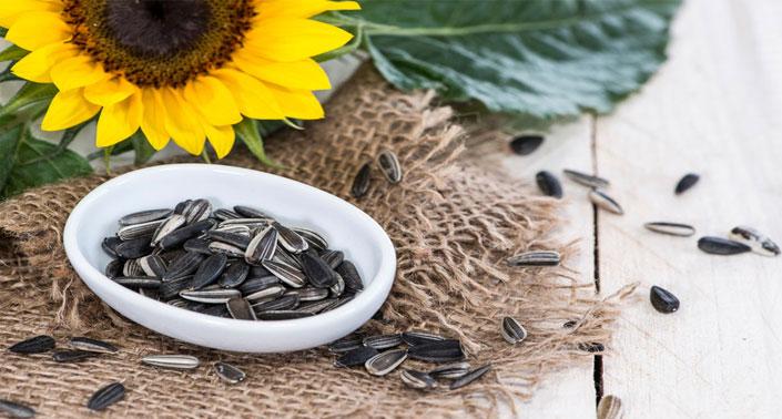 manfaat biji bunga matahari