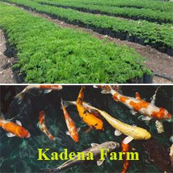 Kadena Farm